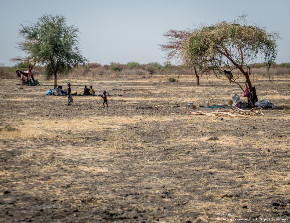 Las personas desplazadas internamente que llegan a Aburoc buscan refugio debajo de un árbol. Cuando las personas llegarWhen people arrived on desde Kodok muy pocos tenían refugios. ©Anthony Jovannic/MSF