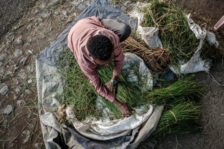 Un hombre arregla paquetes de hierba en el suelo de una calle de Alamata, en Etiopía, el 8 de diciembre de 2020.