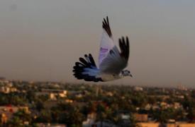 Logista iraquí de Médicos Sin Fronteras que enfrentó la violencia